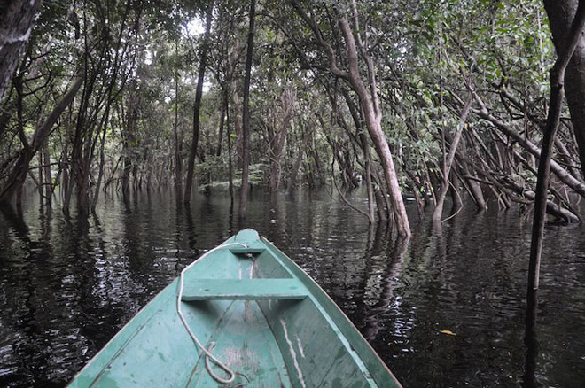 My view while cruising a flooded forest in the Amazon.